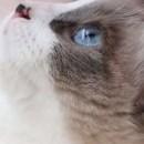 Air 猫酱