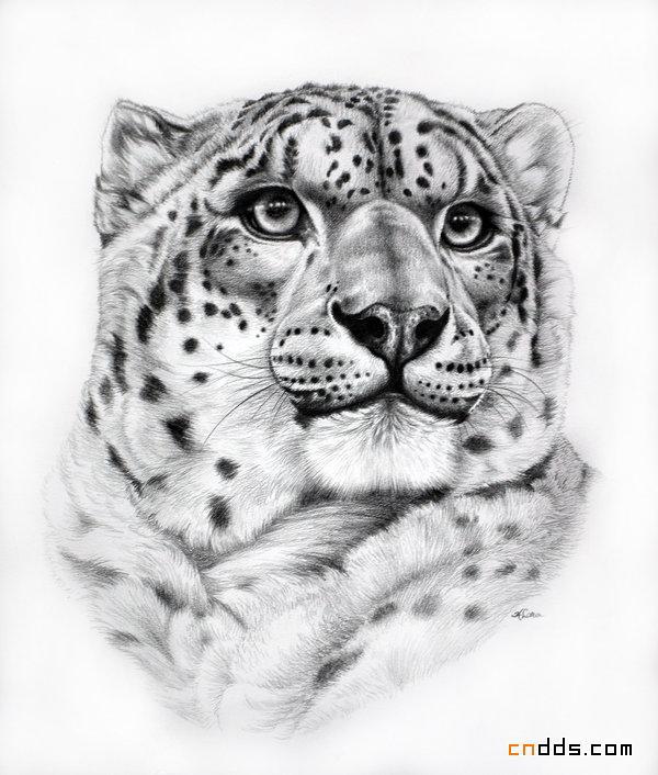 图案黑白装饰画动物