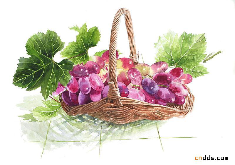 名师笔下的植物水彩画