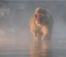 2011 IPA国际摄影大奖:自然类