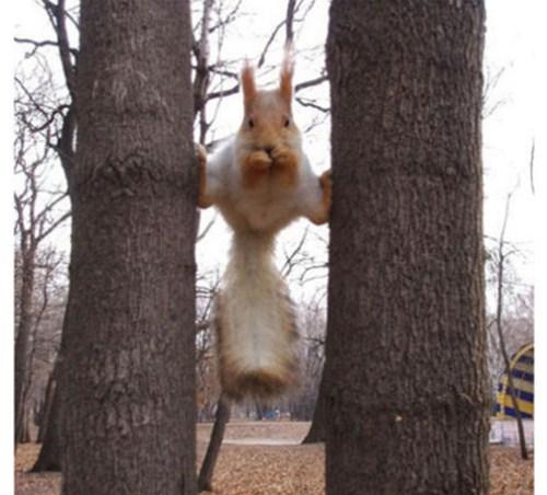 萌翻了的小松鼠