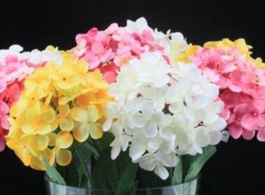 亭亭玉立的洋葱花葱球室内装饰花卉图片大全