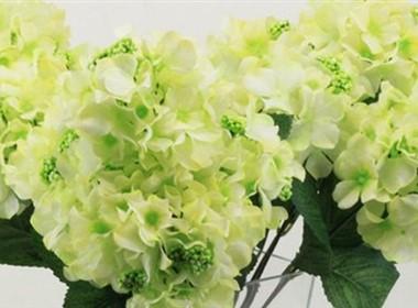 室内装饰花卉图片大全之小瓶桌摆