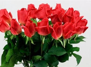 室内装饰花卉图片大全之玫瑰