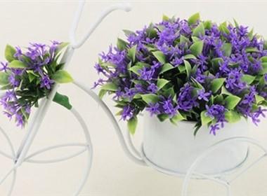 室内装饰花卉图片大全之完美花架