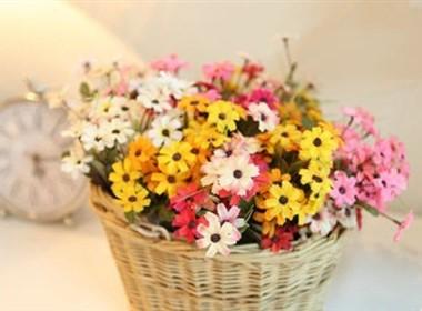 澳洲菊室内装修花卉图片大全