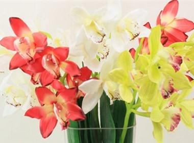 惠兰兰花室内装饰花卉图片大全
