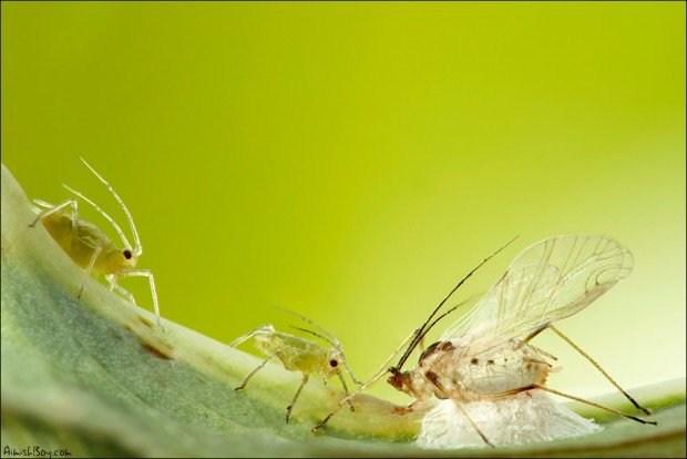 显微镜下的原生态微摄影艺术