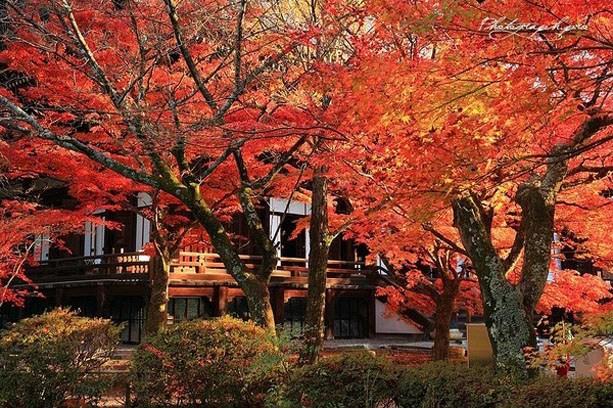 红红火火的唯美秋景摄影