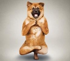 不甘示弱的与瑜伽狗设计欣赏