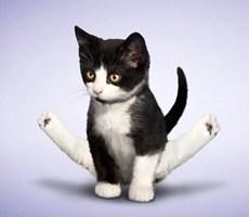 可爱诙谐的瑜伽猫设计风格