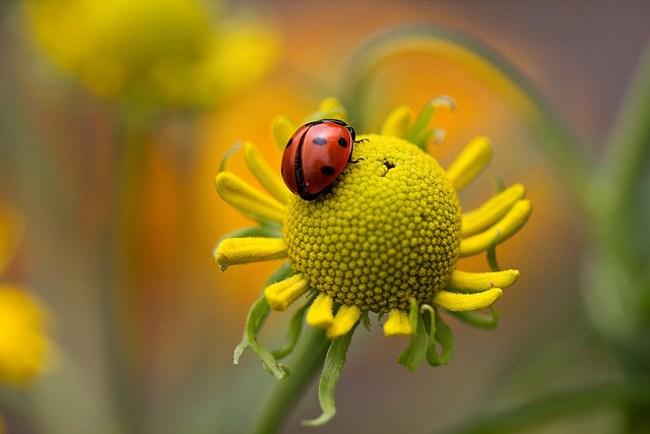 Mandy Disher花卉摄影欣赏