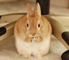 仔细聆听一只兔子的生活