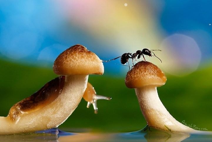 梦想昆虫组合摄影作品欣赏