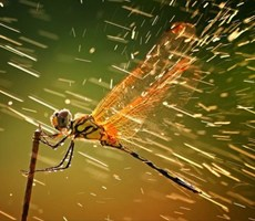 2011国家地理全球摄影大赛获奖作品抢先看