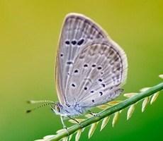 微摄影把昆虫的世界展现的淋漓尽致