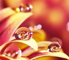 水滴里丰富色彩的世界摄影欣赏