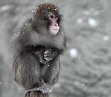 留住冬季独特的唯美雪景摄影