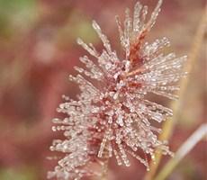 只有冬天才会有的美丽景色摄影欣赏