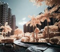 红外摄影下的梦幻秋季香港城市摄影