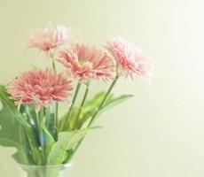 清新唯美花香四溢的摄影集欣赏