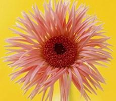 八月赏 .  一朵花