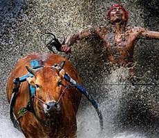 2013世界新闻摄影比赛获奖作品