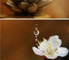 古奥思成标志设计推荐欣赏-自然与禅宗的融合