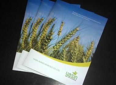 亚迅农产品画册设计