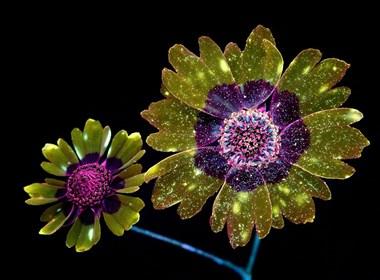 荧光花朵,现实又奇妙