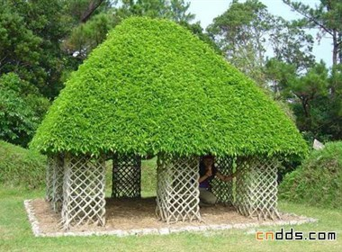 用树木建的房子
