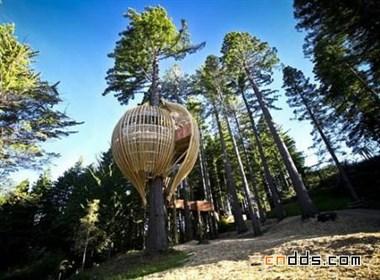 树上的餐厅
