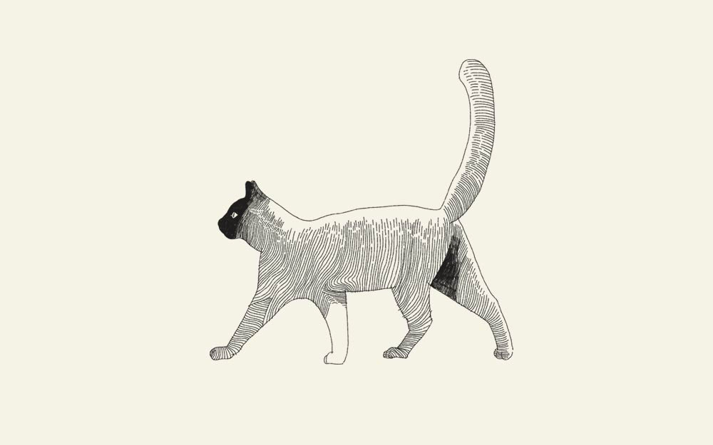 独居动物创意铅笔插画欣赏