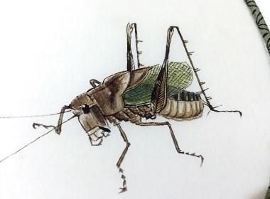 草虫-蝈蝈