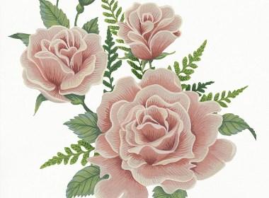 花卉插画写生