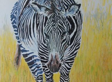 我的动物画插图