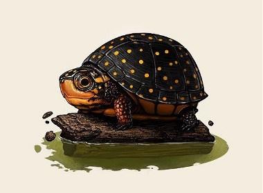 一组小动物精美插画作品