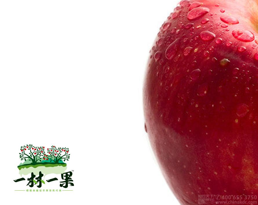 知行天下出品:一林一果 栖霞典藏级苹果首席代表