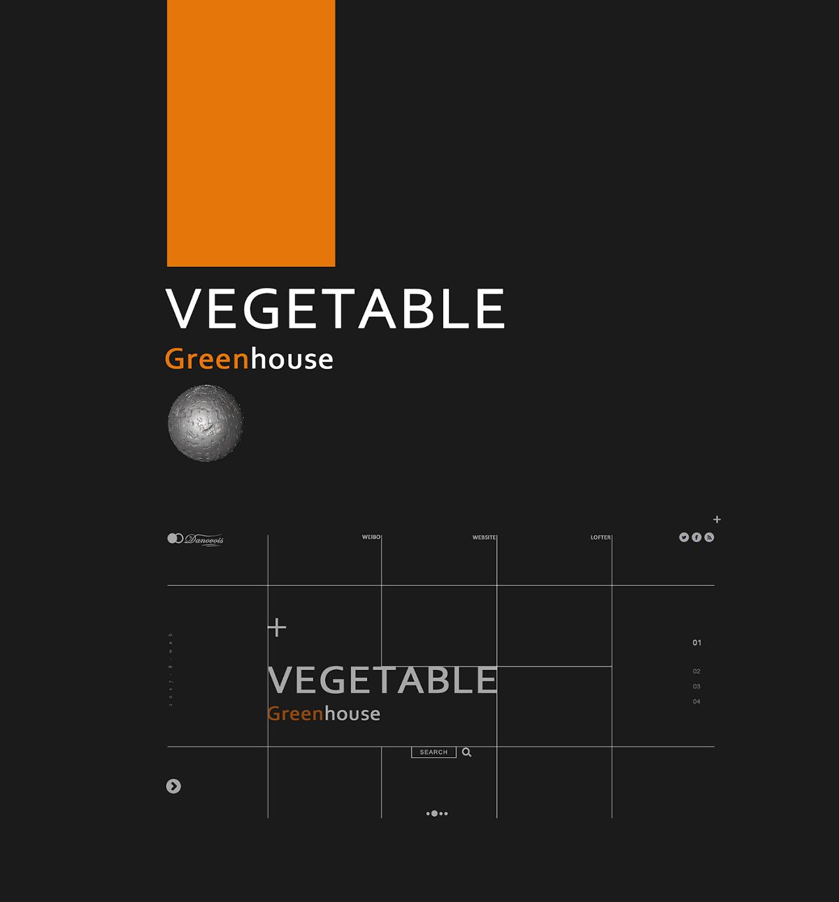 蔬菜种植大棚