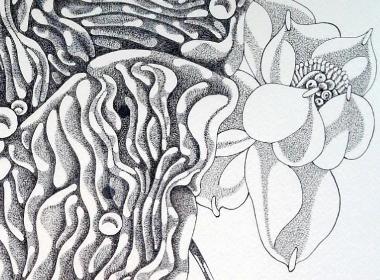 钢笔画【禅是一朵莲】