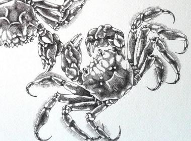 钢笔画【秋深蟹肥】