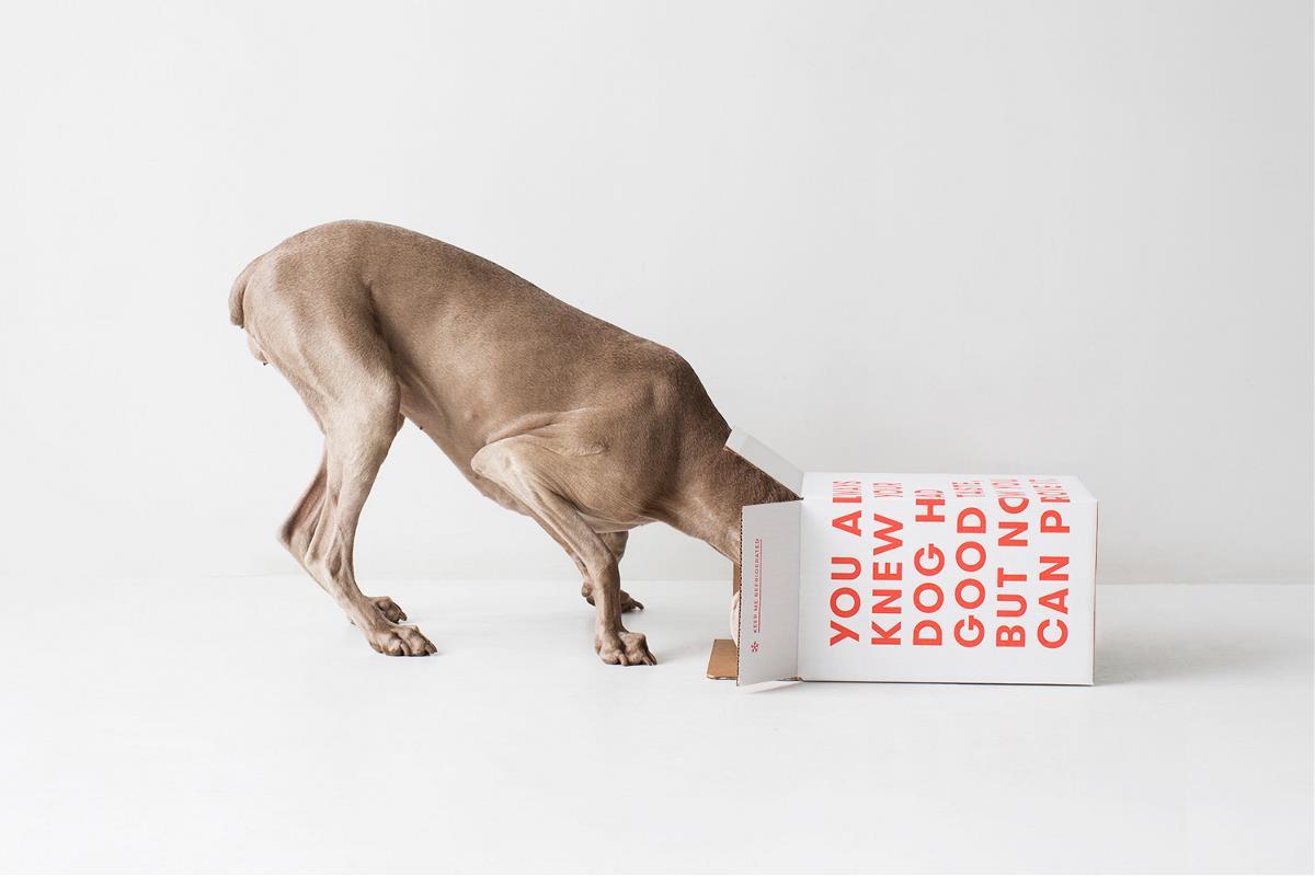 包装胶带都超可爱的国外宠物食品VI设计