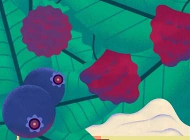 格调插画|蓝莓出土不容易,且出且珍惜