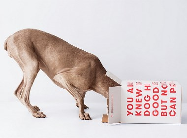 OLLIE宠物品牌视觉设计 | 摩尼视觉分享
