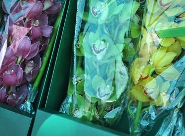 花卉品牌全案
