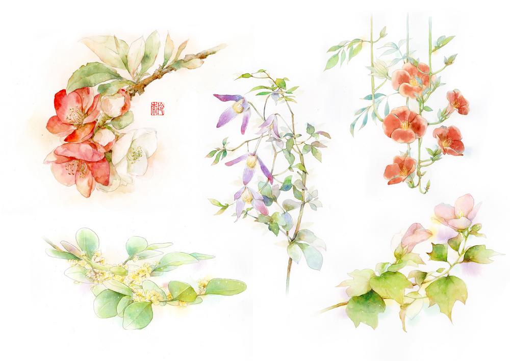 花卉插画欣赏