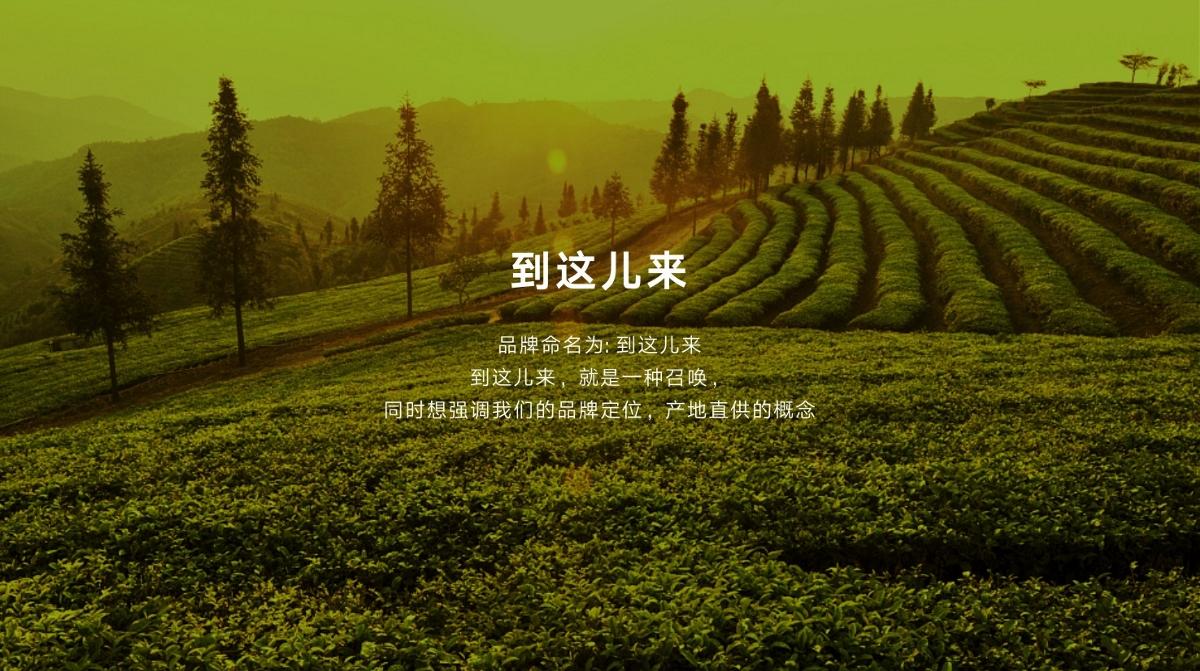 農業品牌全案設計-到這兒來