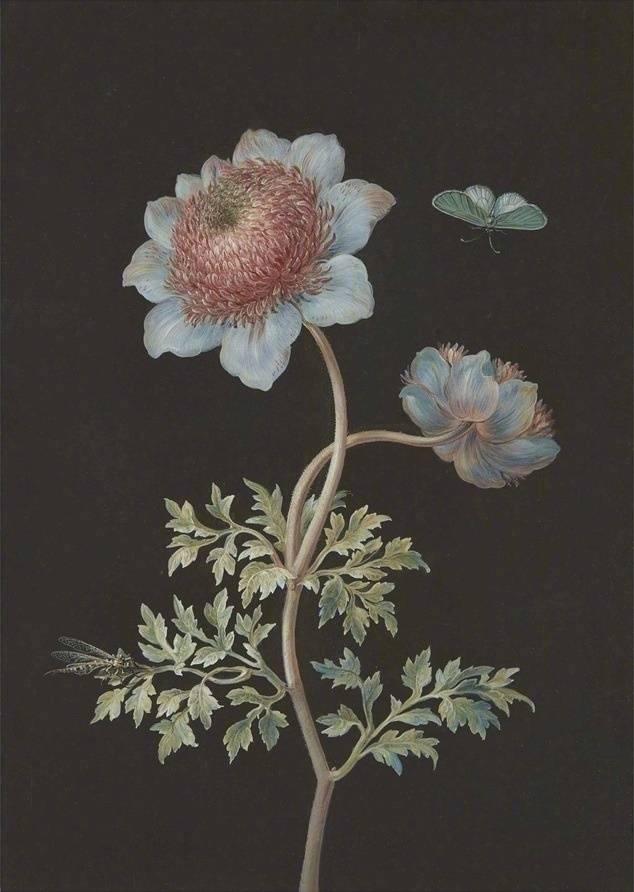 复古花卉插画