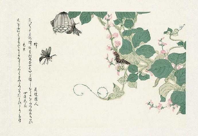 《昆虫书》插画欣赏