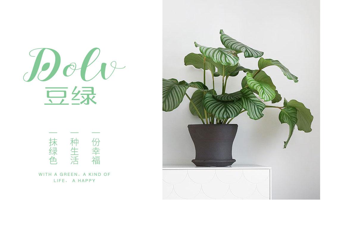豆绿品牌设计